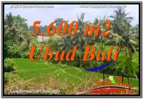 TANAH MURAH  di UBUD BALI DIJUAL 5,600 m2  View Sawah, Link. Villa