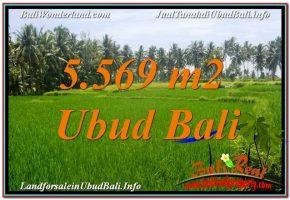 TANAH DIJUAL di UBUD BALI 5,569 m2  View Sawah dan Sungai Kecil