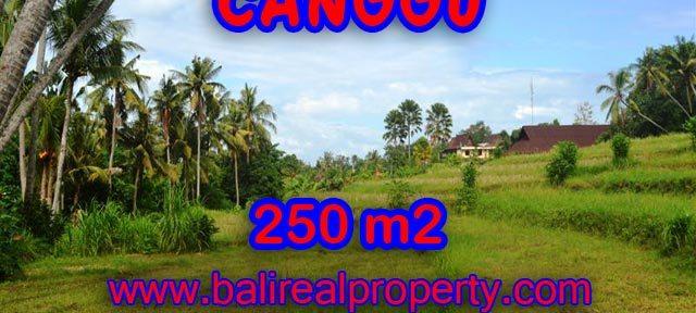 Tanah dijual di Canggu Bali 2,5 are di Canggu Pererenan