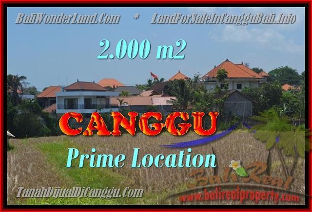 JUAL MURAH TANAH di CANGGU BALI 20 Are View sawah lingkungan villa