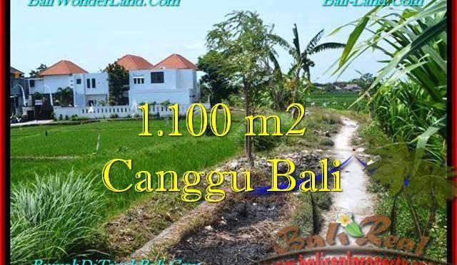 DIJUAL TANAH MURAH di CANGGU BALI 1,100 m2 di Canggu Brawa