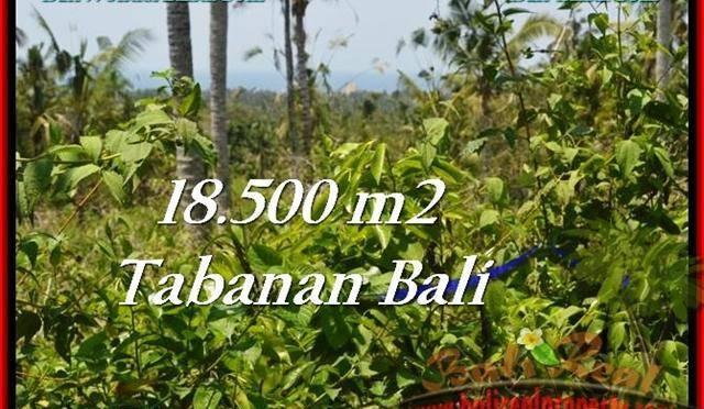 DIJUAL TANAH di TABANAN 18,500 m2 di Tabanan Selemadeg