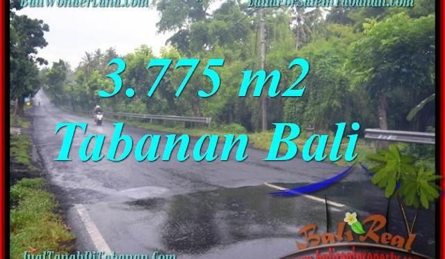 TANAH di TABANAN BALI DIJUAL MURAH 37.75 Are View kebun