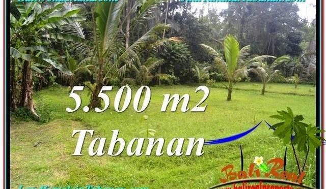 JUAL TANAH MURAH di TABANAN 5,500 m2 View kebun dan sungai
