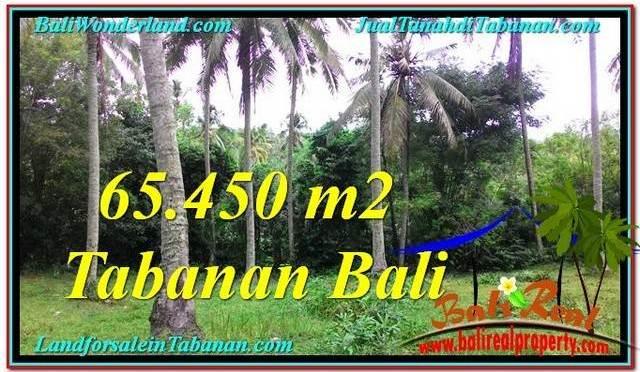 TANAH MURAH DIJUAL di TABANAN BALI 654.5 Are di Tabanan Selemadeg