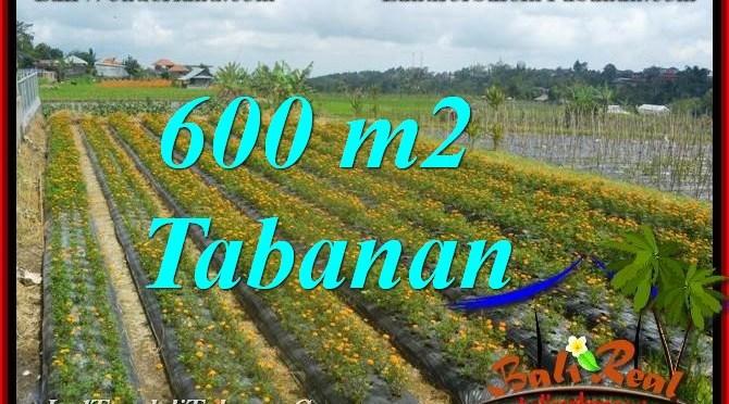 TANAH di TABANAN BALI DIJUAL MURAH 6 Are view kebun dan Gunung
