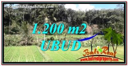 TANAH di UBUD BALI DIJUAL 1,200 m2 View sawah