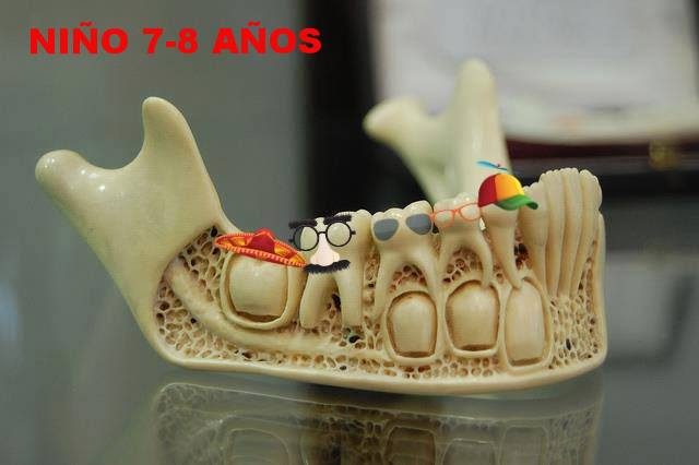 Familia DentiMix