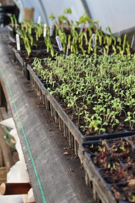 Jubilee Farm's veggies for your vegbox.