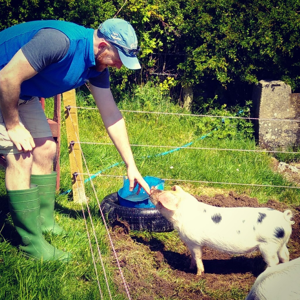 One of Jubilee Farm's Pig Club pigs.