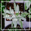 5 Plants That Bring Good Energy