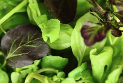 863921296-salatblatt-gruener-salat-zutat-food
