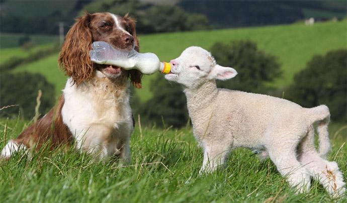 Image result for animal welfare