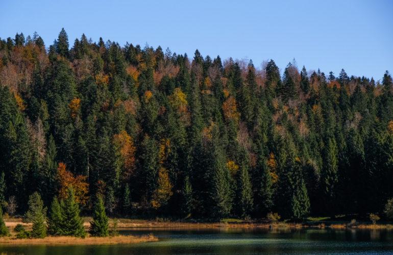 Le Lac Genin : le petit Canada à une heure de Lyon