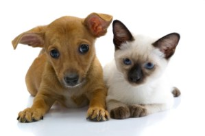 image of a dog and a cat