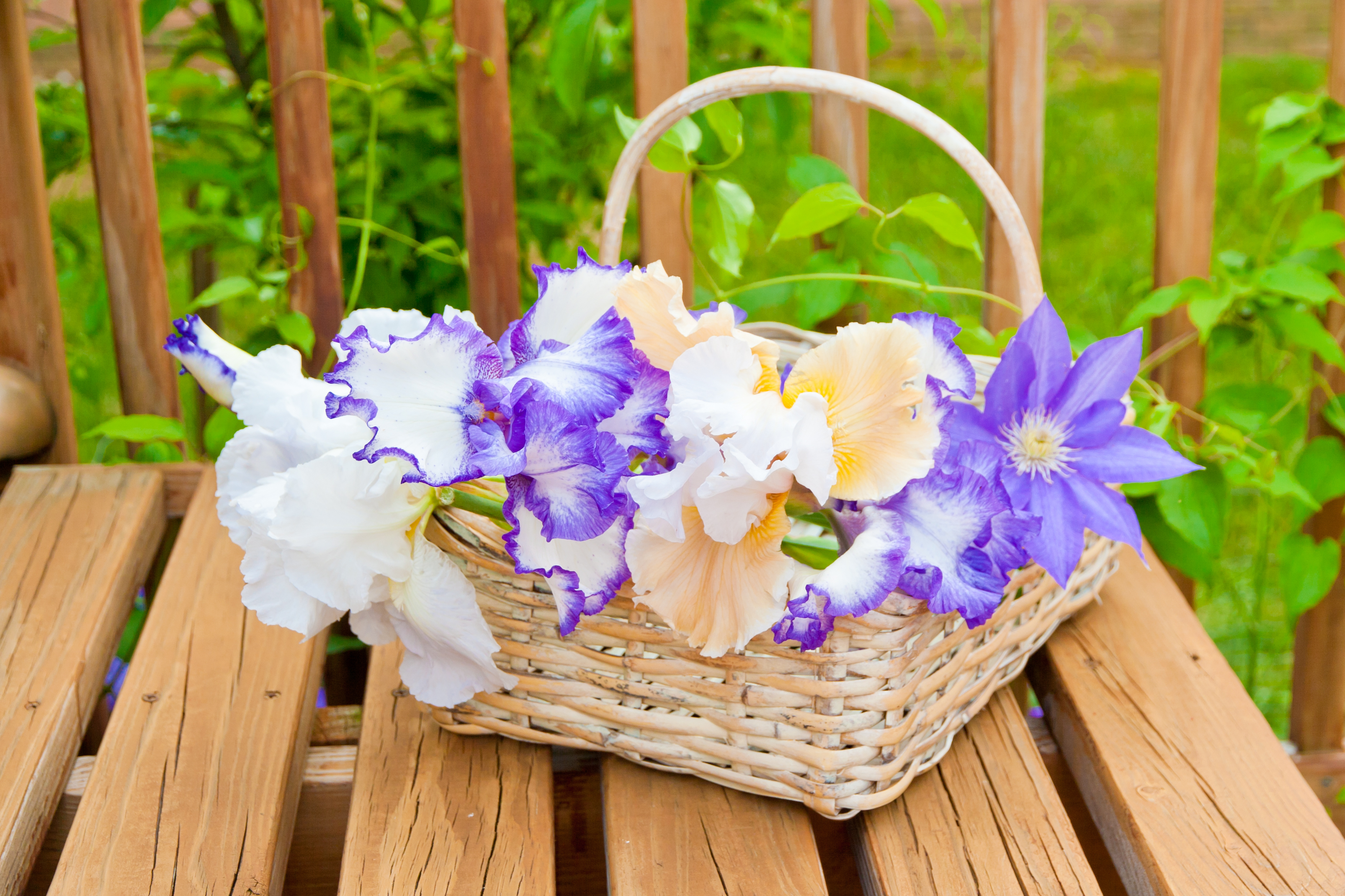 bigstock-Basket-With-Irises-Garden-Flow-489206601.jpg