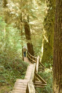 Boardwalk in the rainforest of Long Beach Nat. Park, Tofino BC