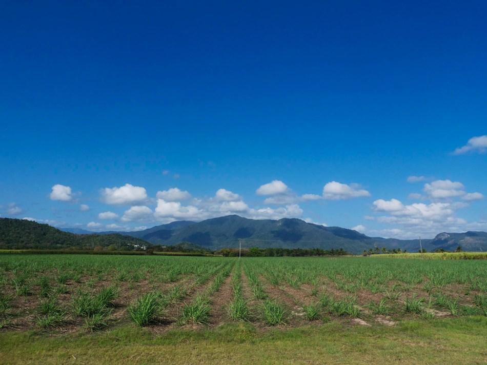 cairns sugar cane