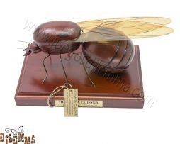 hormiga culona grande en madera