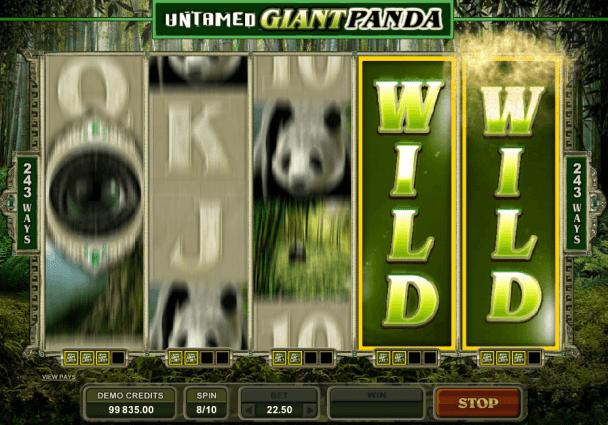 Untamed Gigant Panda
