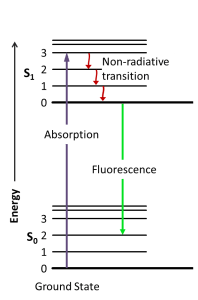 Diagram of Fluorescence Only (Jablonski)