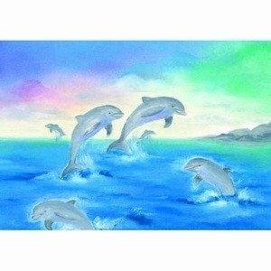 Baukje-exler-dolfijnen