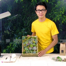 How To Make a Living Picture Frame by planting succulents in a picture frame.