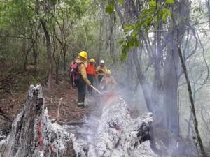Combatientes de Parques sofocando un tronco humeante (Large)