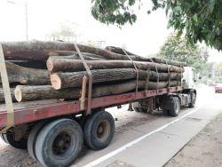 madera caimancito