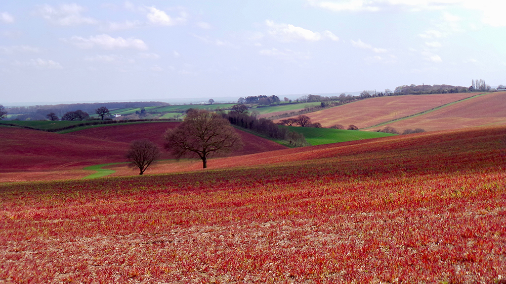 Red fields