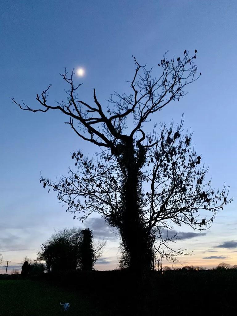 Tree in field at twilight