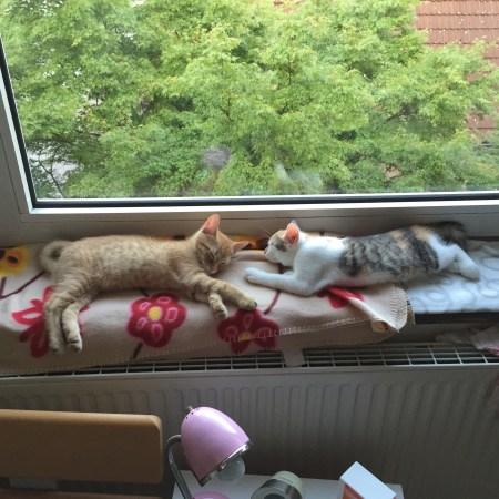 Anton (links) und Pünktchen (rechts) haben sich beide auf der Decke auf der Fensterbank in meinem Zimmer schlafen gelegt.