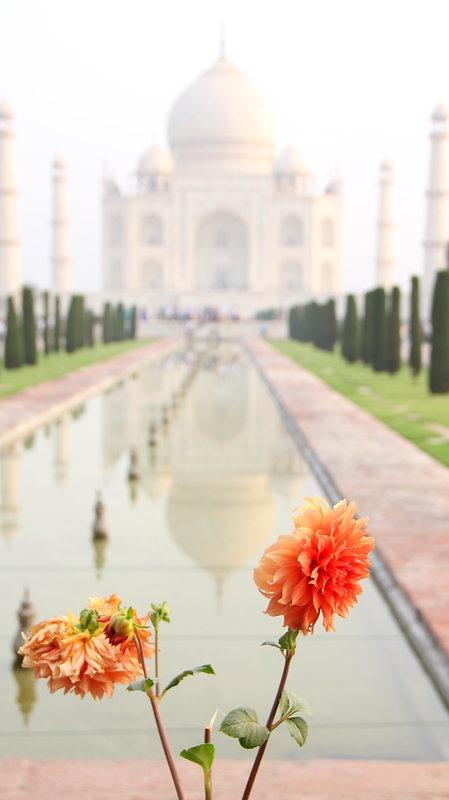 Faire une photo différente Taj fleur