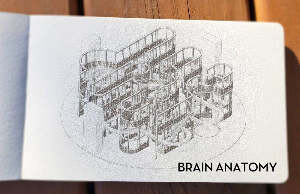 El diseño laberintico de una biblioteca creada a partir del cerebro