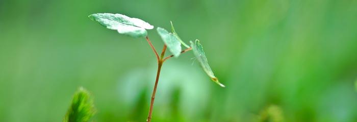 Green sprout extending taller than its surroundings
