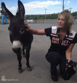 Emmitt the Donkey at Sturgis