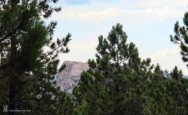 Mt Rushmore viewed through the trees