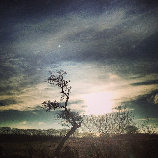 Hawthorn View