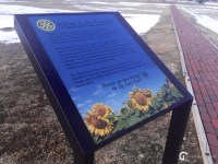 Road Trip Adventures with JulieG.TV in Goodland, Kansas - Sunflowers