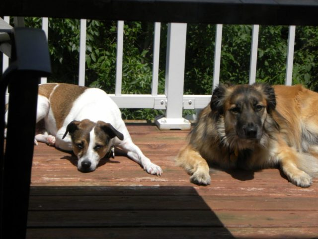 Dogs on the deck