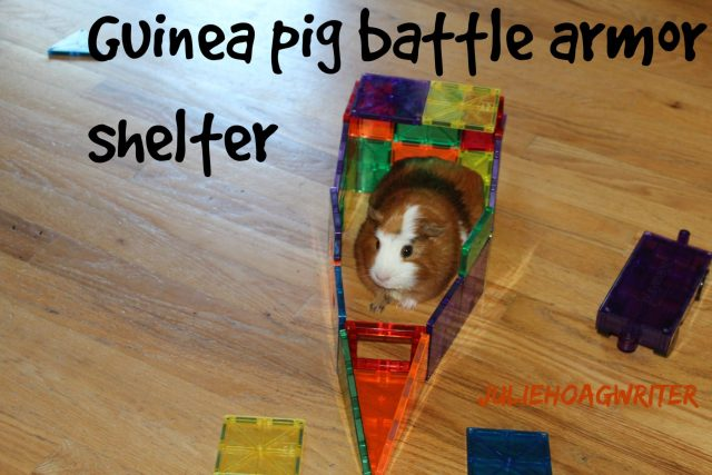 Guinea Pig Battle shelter