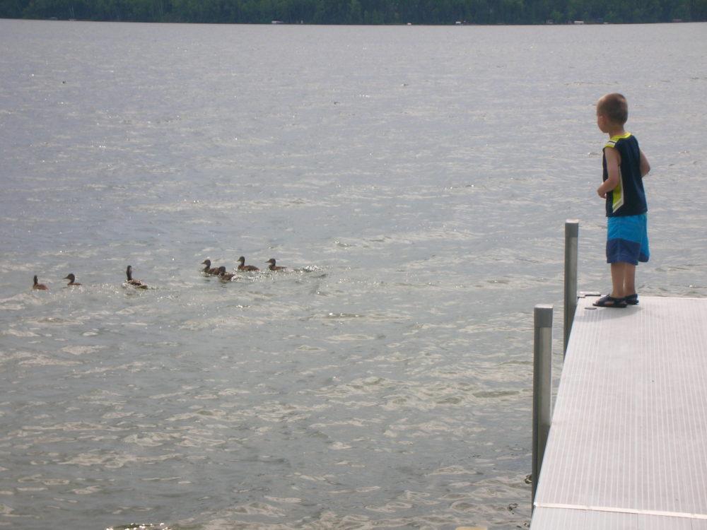 Preschoooler looking at ducks off a dock