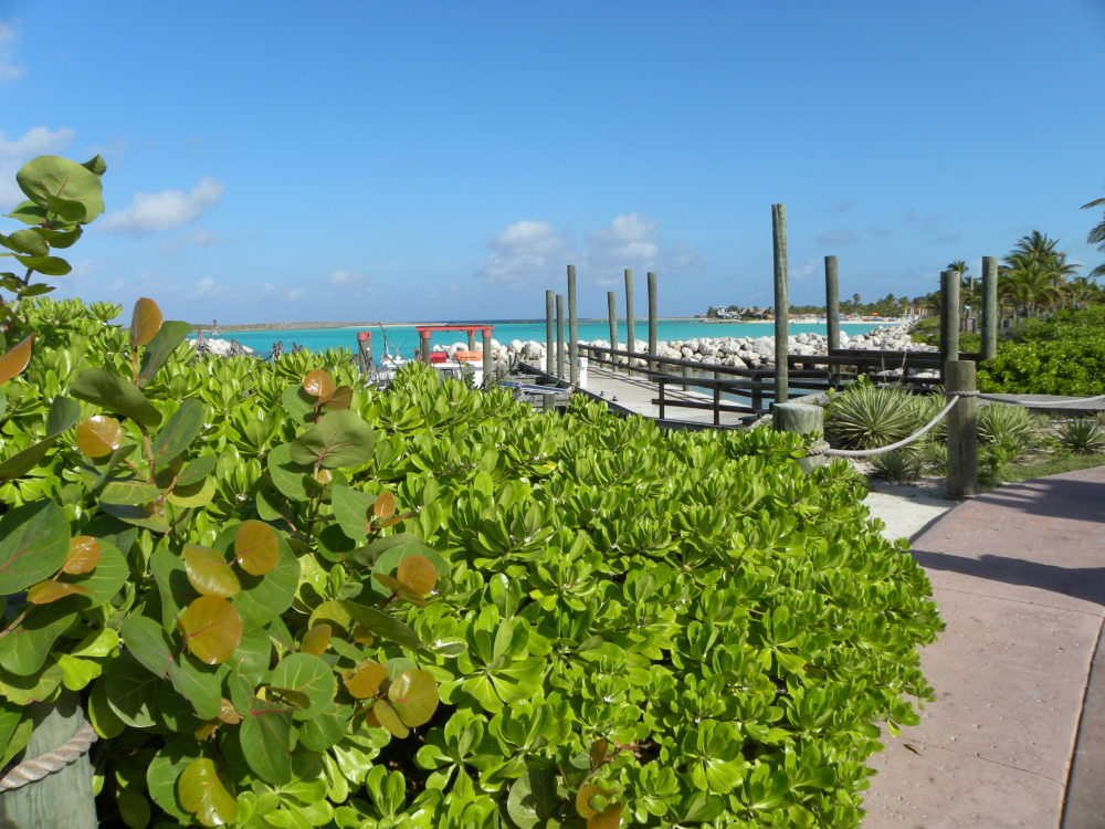 Gorgeous foliage, dock, and ocean water at Castaway Cay