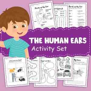 Human Ear Printable Activities