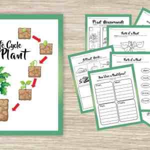 Plant Life Cycle Printable Activities