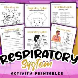 Respiratory System Printable Activities