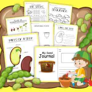 All About Seeds Printable Activities