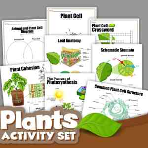 Advanced Plant Printable Activities Pack