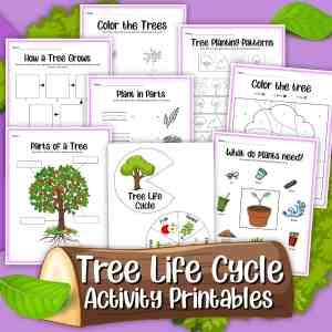 Tree Life Cycle Printables Pack