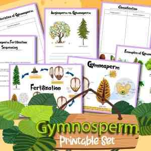 Gymnosperm Reproduction Printables Pack